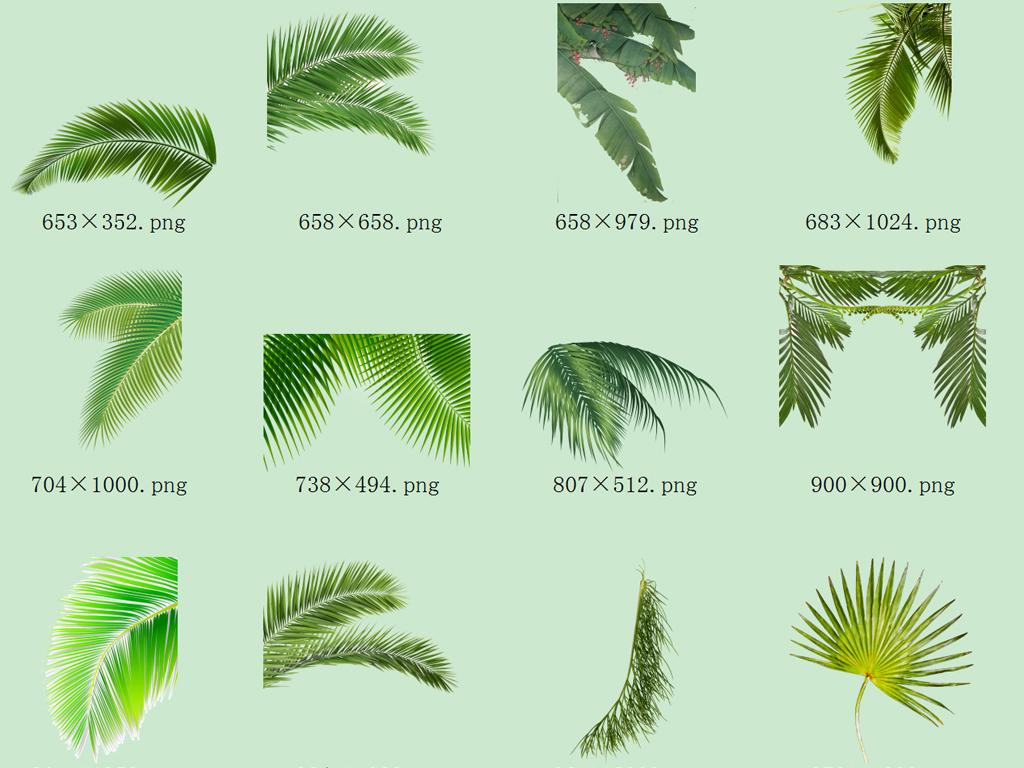 大叶子                                          热带雨林