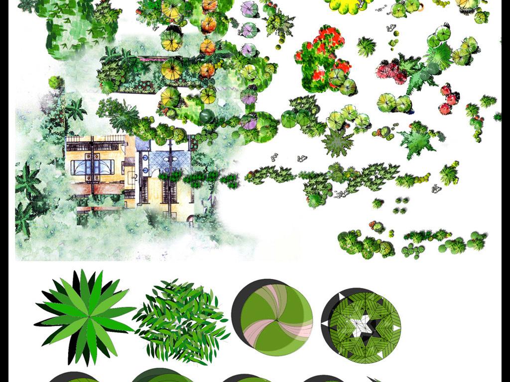 园林设计彩平植物图