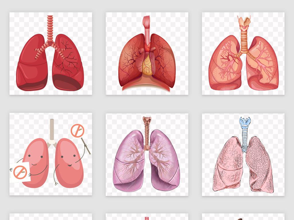素材人体肺部素材肺部图片手绘心肺人体心肺心肺健康免抠肺部医学人体