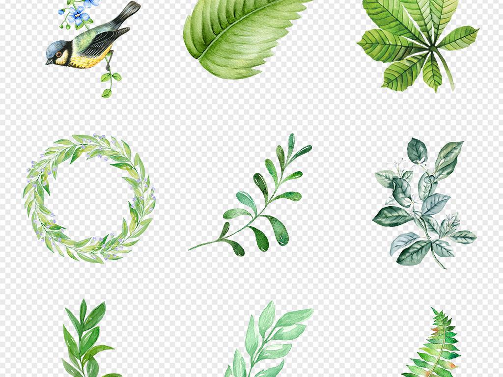 50款清新手绘插画水彩绿植叶子png素材