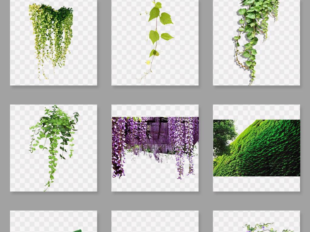 树藤叶子藤蔓花藤花圈手绘花藤花藤边框树叶绿色素材树藤绿色素材绿色