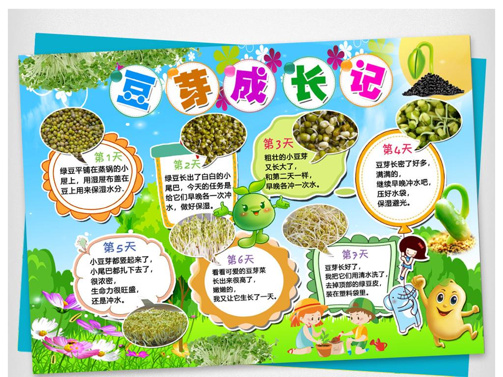 黄豆芽生长过程日记小报植物观察日记手抄报