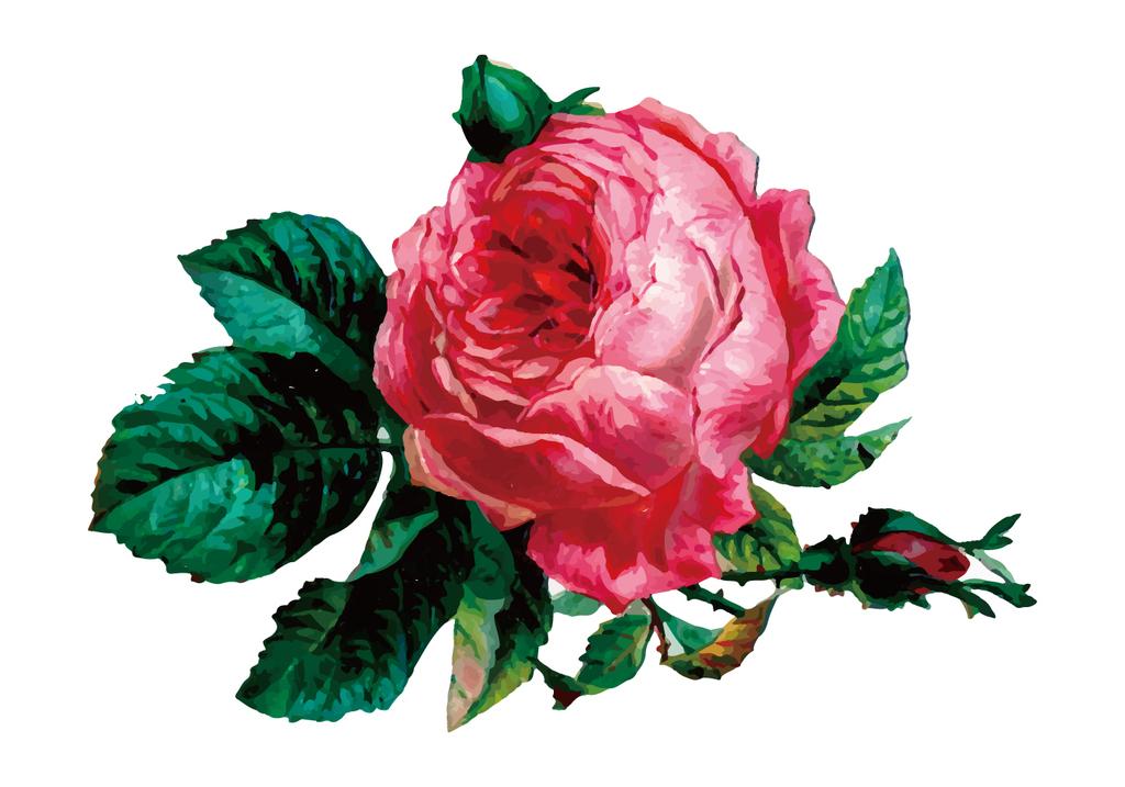 手绘水彩玫瑰花印花图案