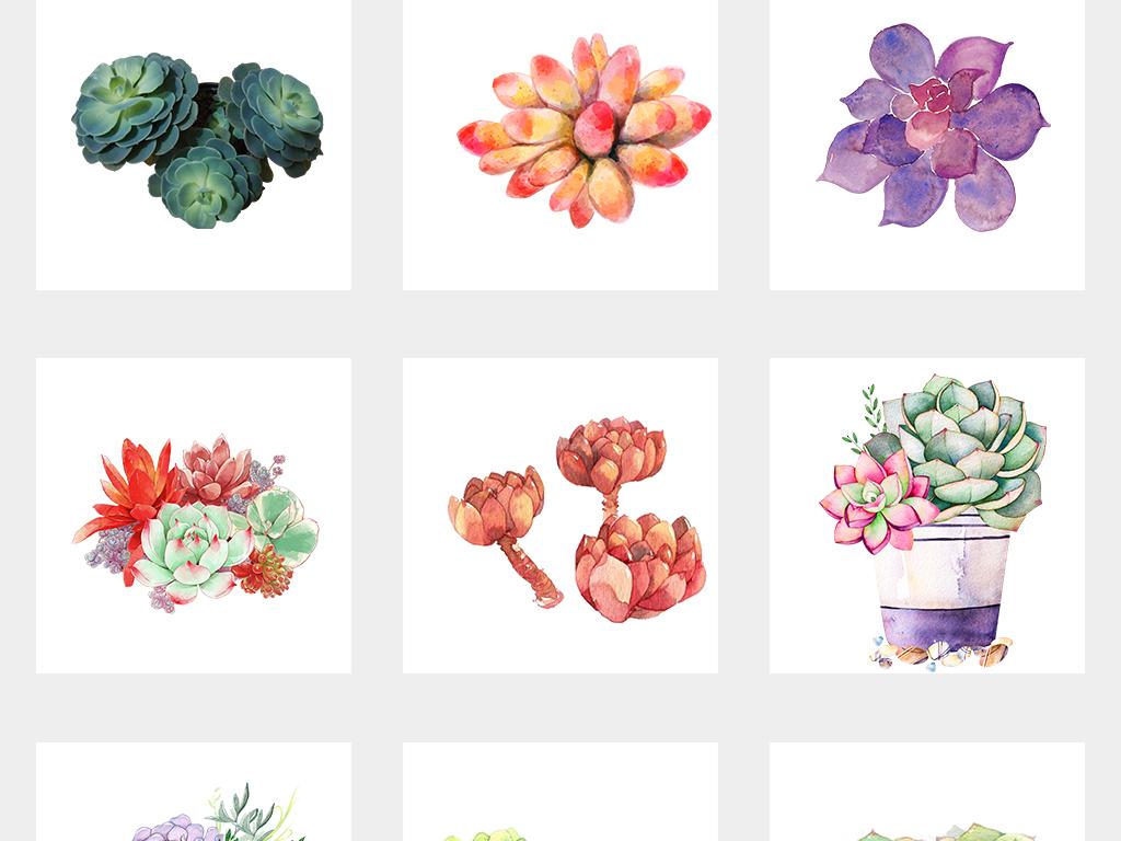 可爱手绘多肉植物盆栽png透明背景素材