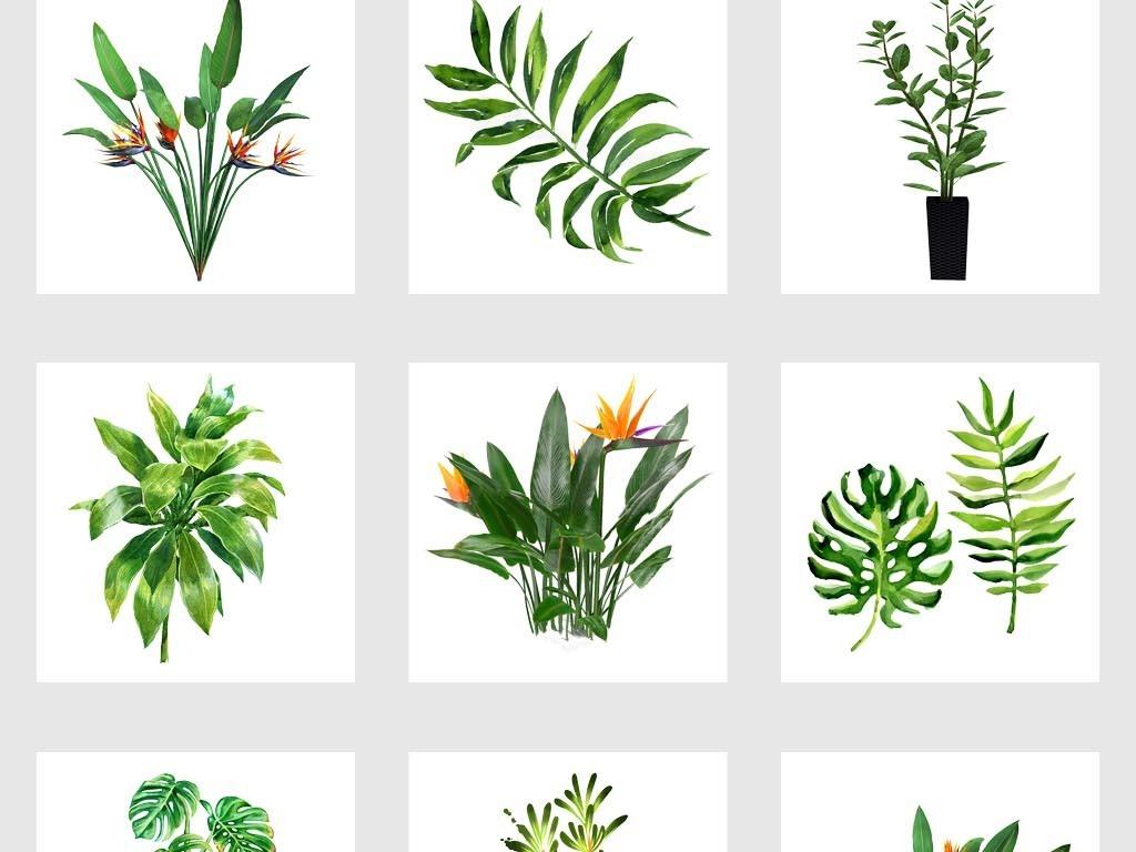 北欧小清新水彩绿色热带植物叶子树叶png免扣素材图片