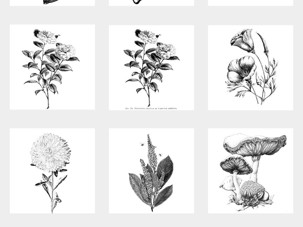 黑白素描植物蔬菜水果花朵铜版画手绘线稿png免扣素材