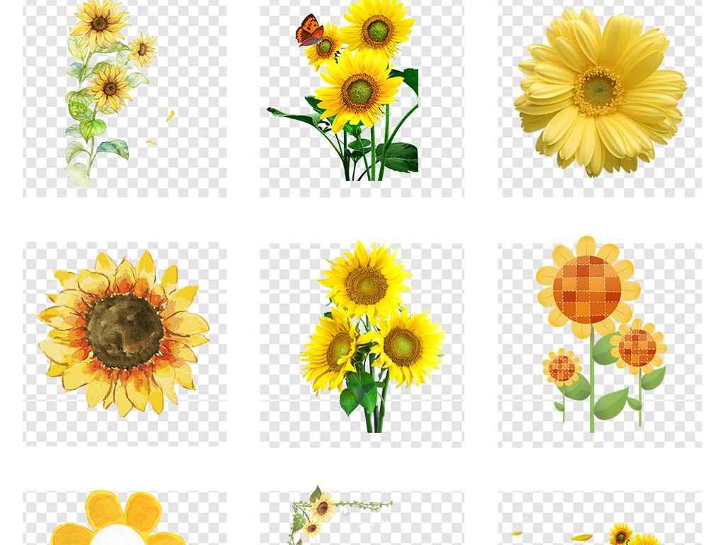 50款卡通手绘向日葵太阳花背景png素材