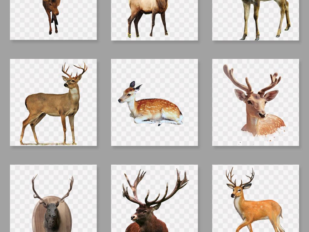 设计元素 自然素材 动物 > 梅花鹿森林鹿麋鹿免扣素材  素材图片参数