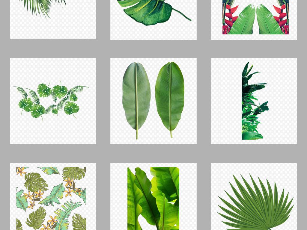 设计元素 自然素材 树叶 > 北欧小清新美式手绘插画水彩绿植设计素材图片