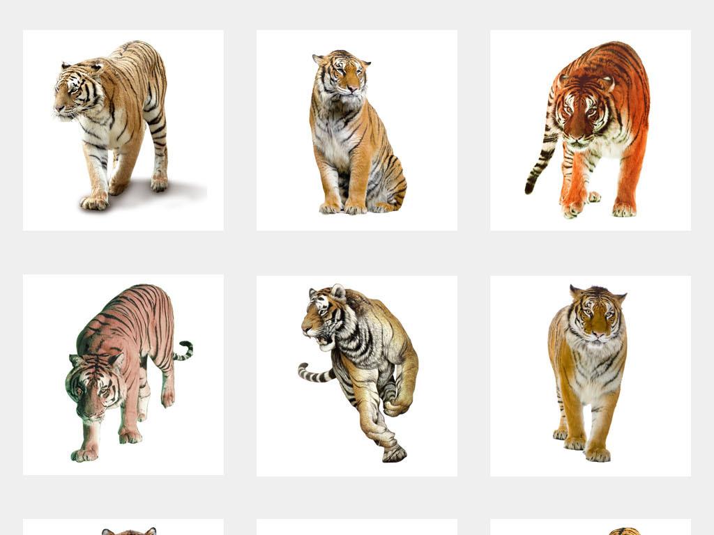 手绘动物水墨黑白壁画壁纸墙纸矢量设计卡通图片素材背景森林
