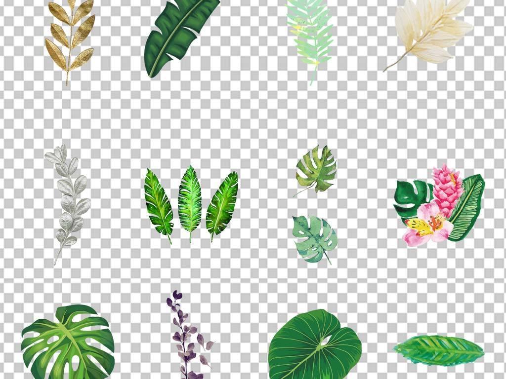 清新手绘插画水彩绿植叶子png素材