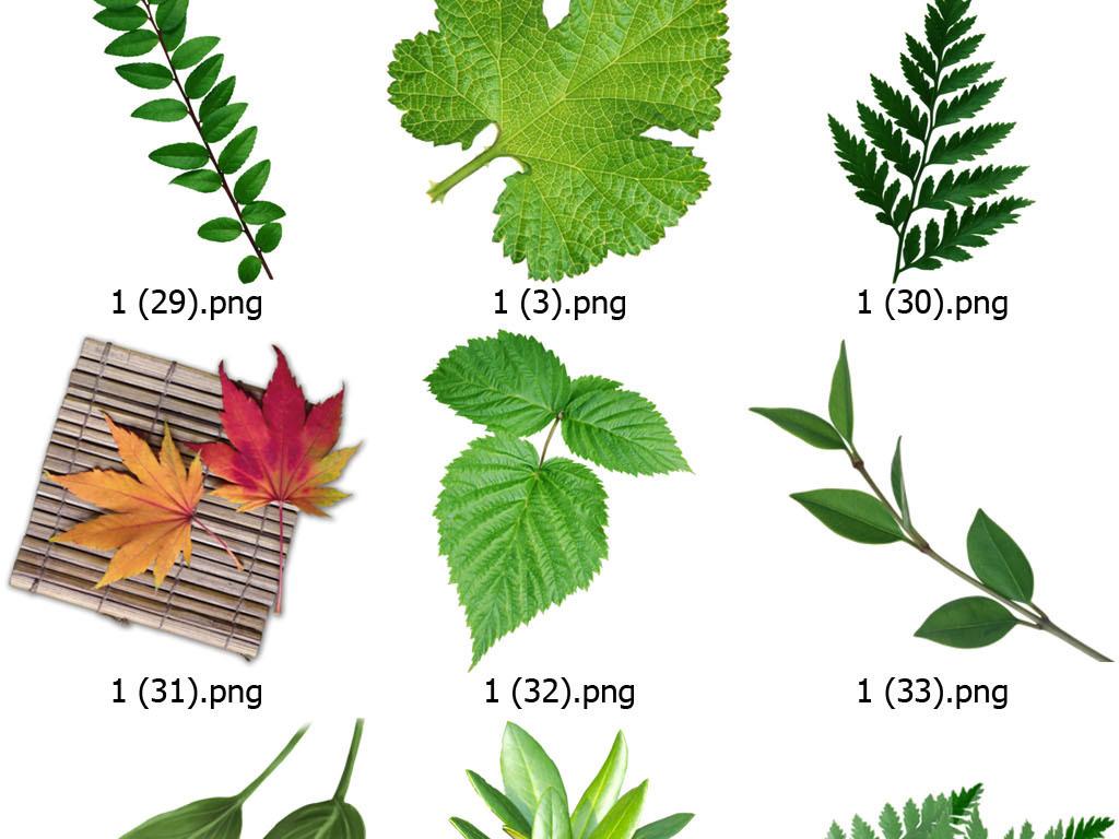 一片绿叶绿叶植物底纹绿色漂浮