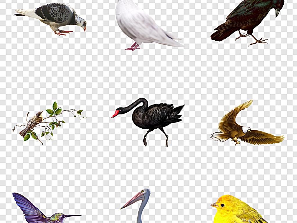 鸟类小鸟手绘图片素材水彩小鸟