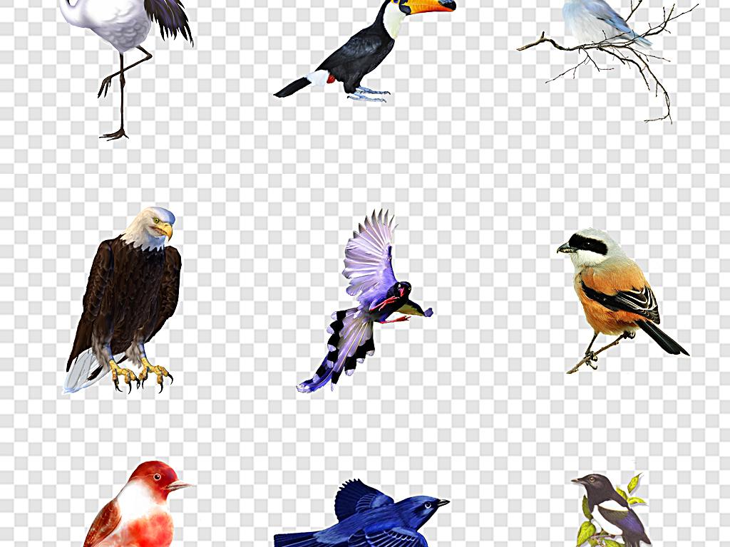 手绘小鸟工笔画鸟素材