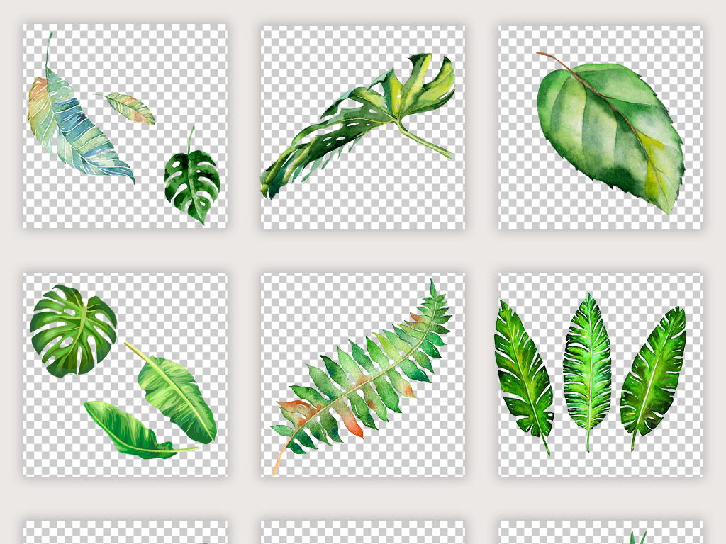森系北欧热带雨林手绘水彩树叶绿植插画素材