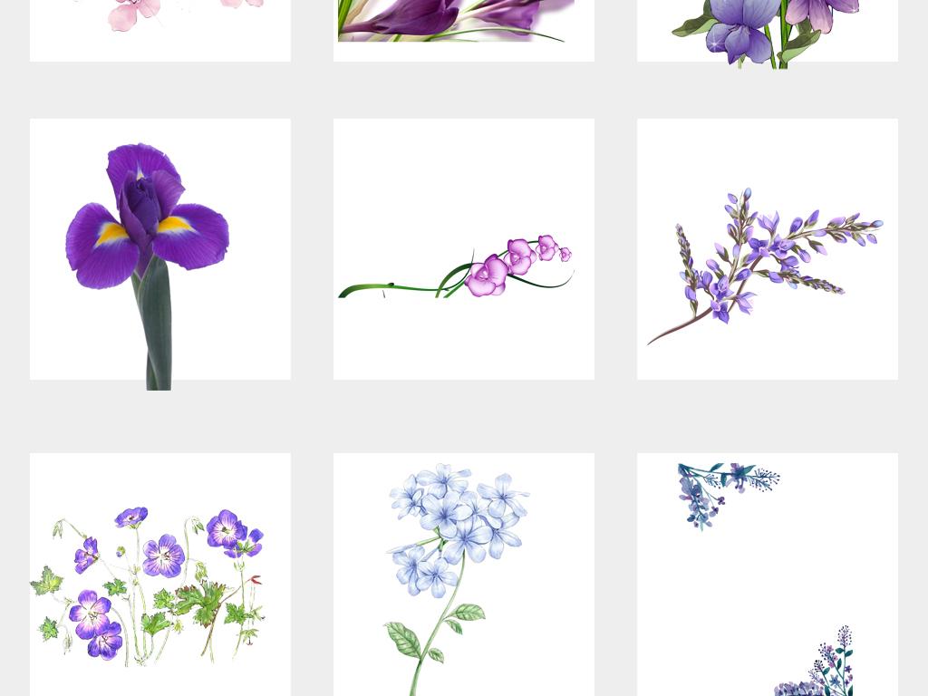 唯美手绘花紫罗兰水彩花朵海报设计png免扣元素