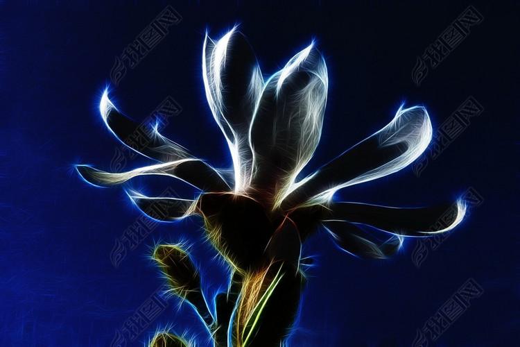 创意蓝色艺术花卉摄影