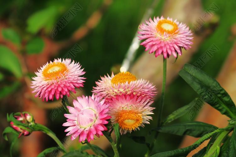 春天野花高清摄影唯美小清新自然植物