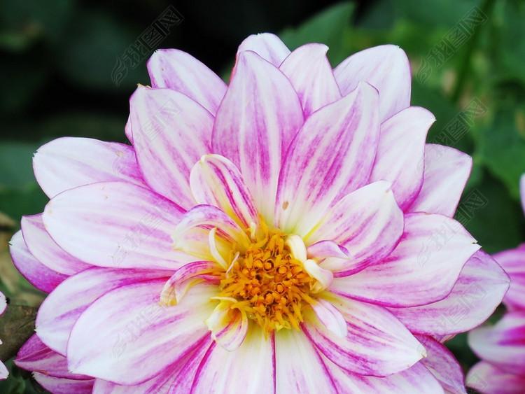 花卉高清摄影