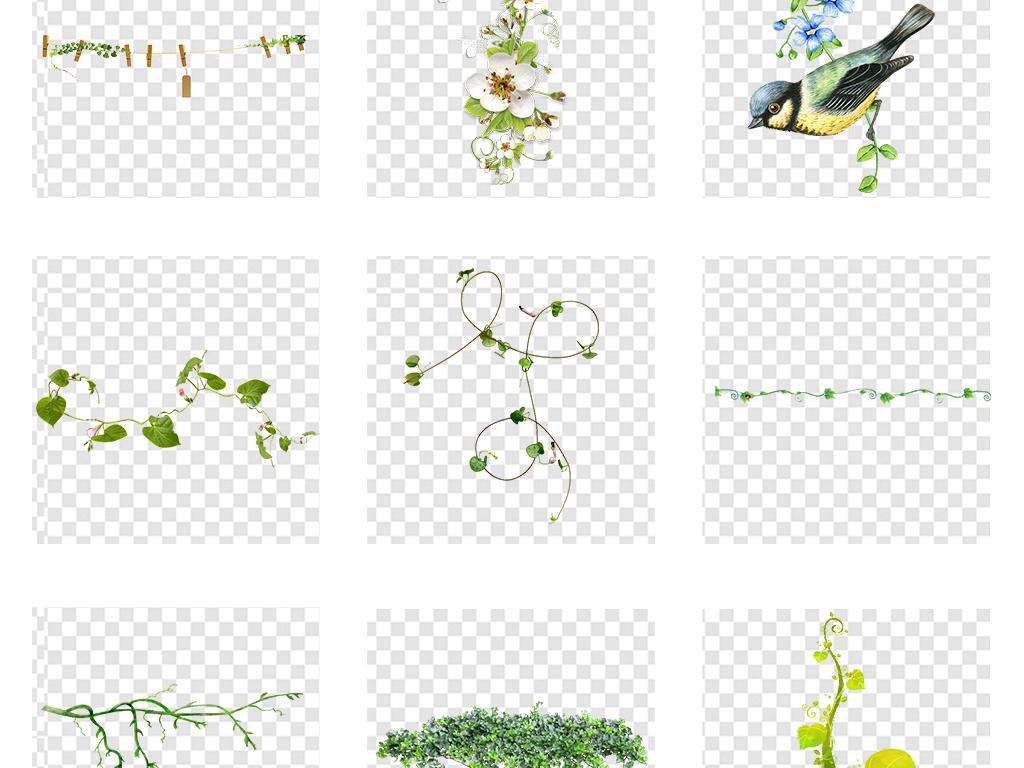 树藤叶子藤蔓花藤花圈手绘花藤花藤边框春天树叶绿色春季树藤绿色树叶