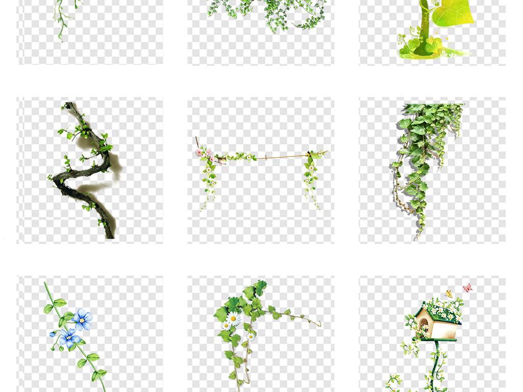 藤蔓花藤花圈手绘花藤花藤边框春天树叶绿色春季树藤绿色树叶春天绿色