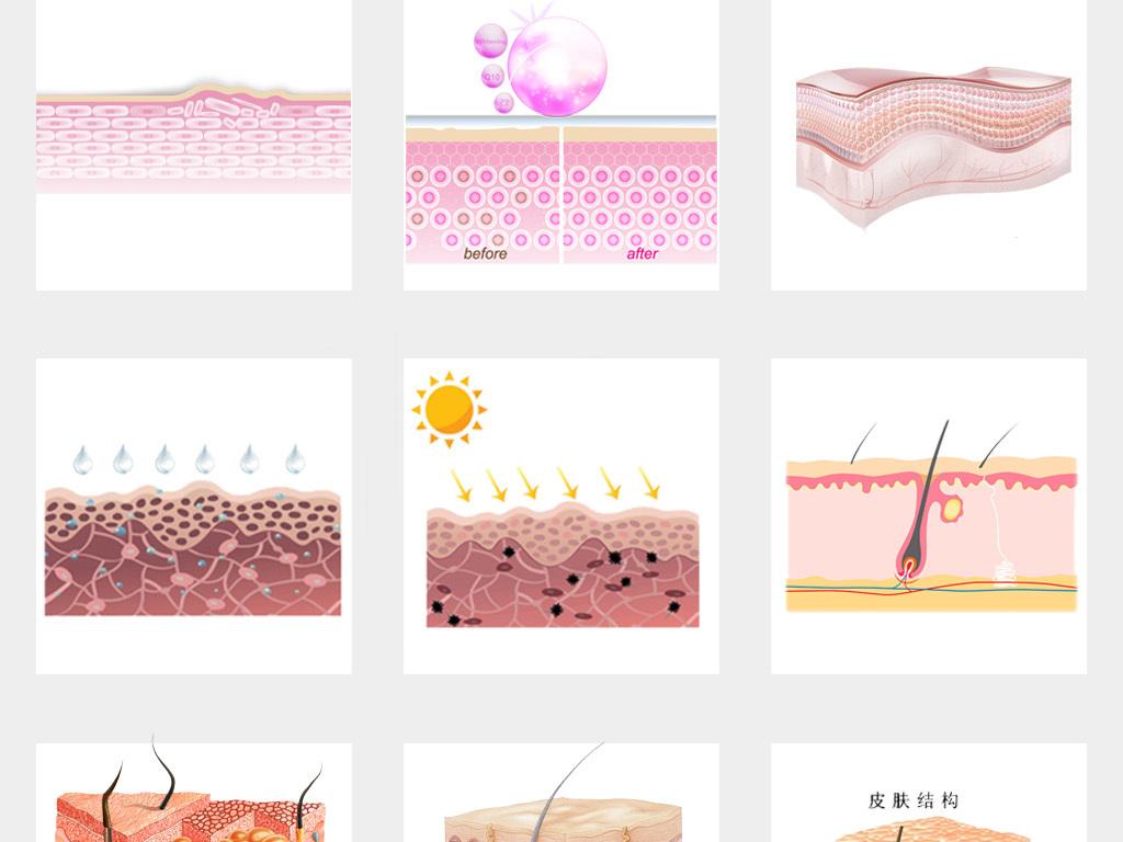 50款皮肤层结构细胞组织护肤品保养png素材
