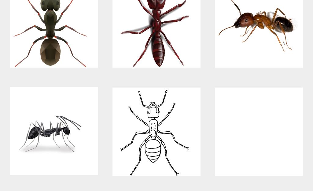 手绘可爱蚂蚁实物蚂蚁动物海报图png免扣素材
