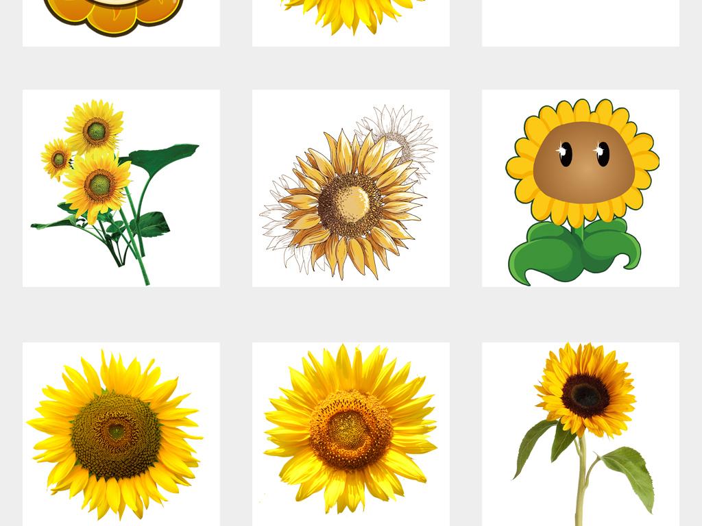 卡通手绘向日葵边框海报设计png素材