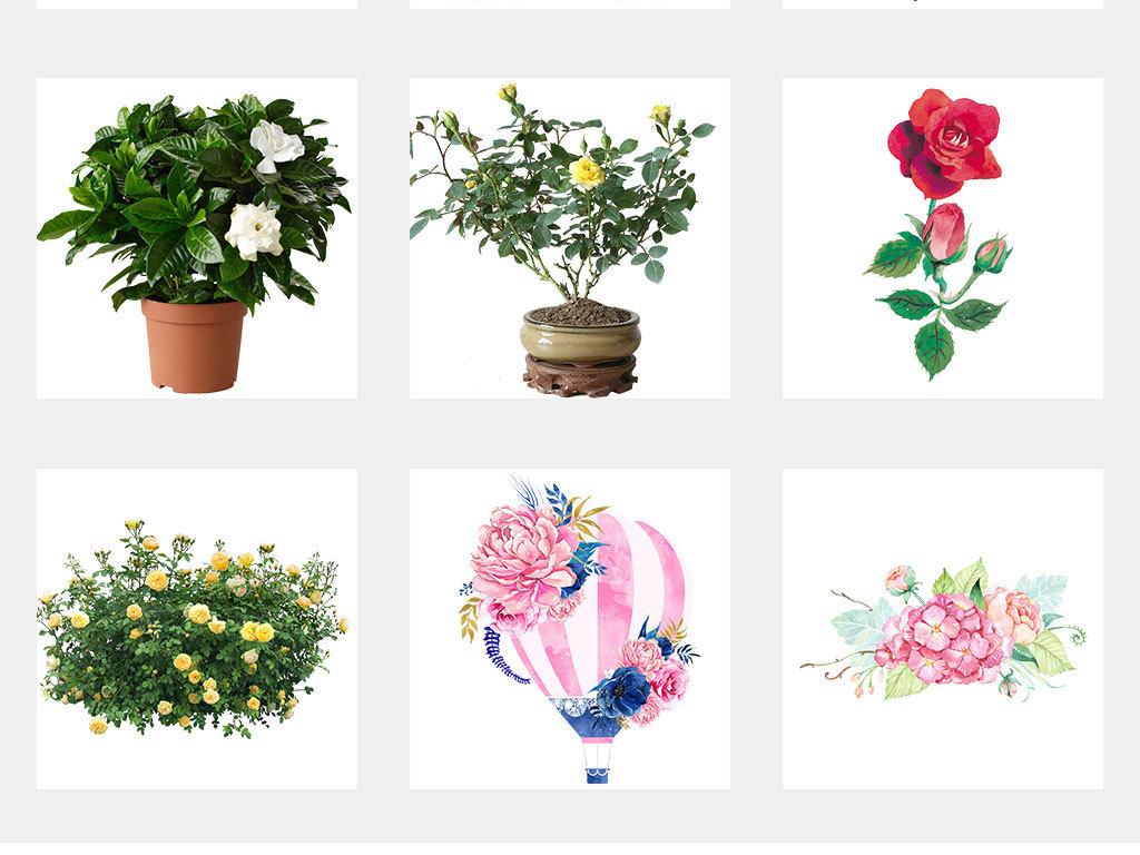 手绘月季玫瑰月季花瓣水墨玫瑰花png