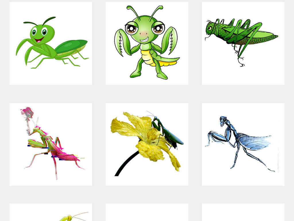 卡通螳螂手绘昆虫螳螂标本海报png素材