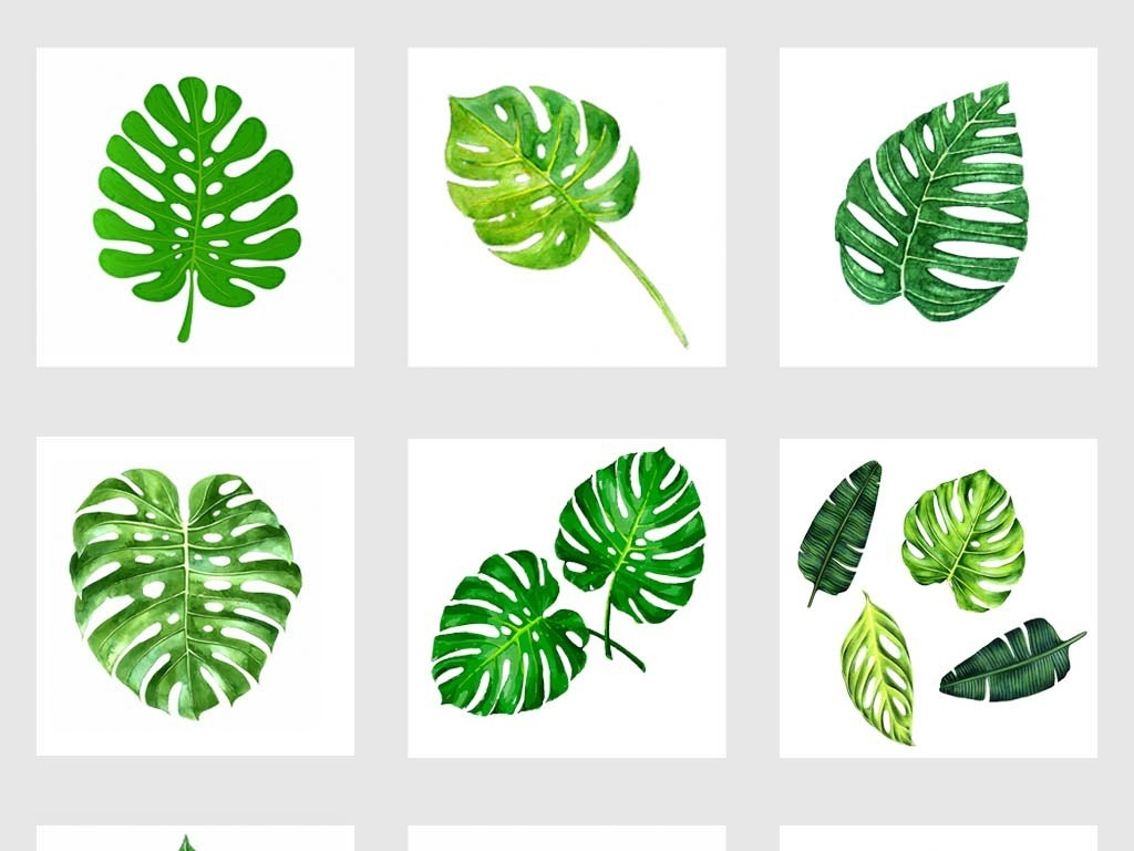 小清新热带植物夏季叶子水彩树叶龟背竹叶png