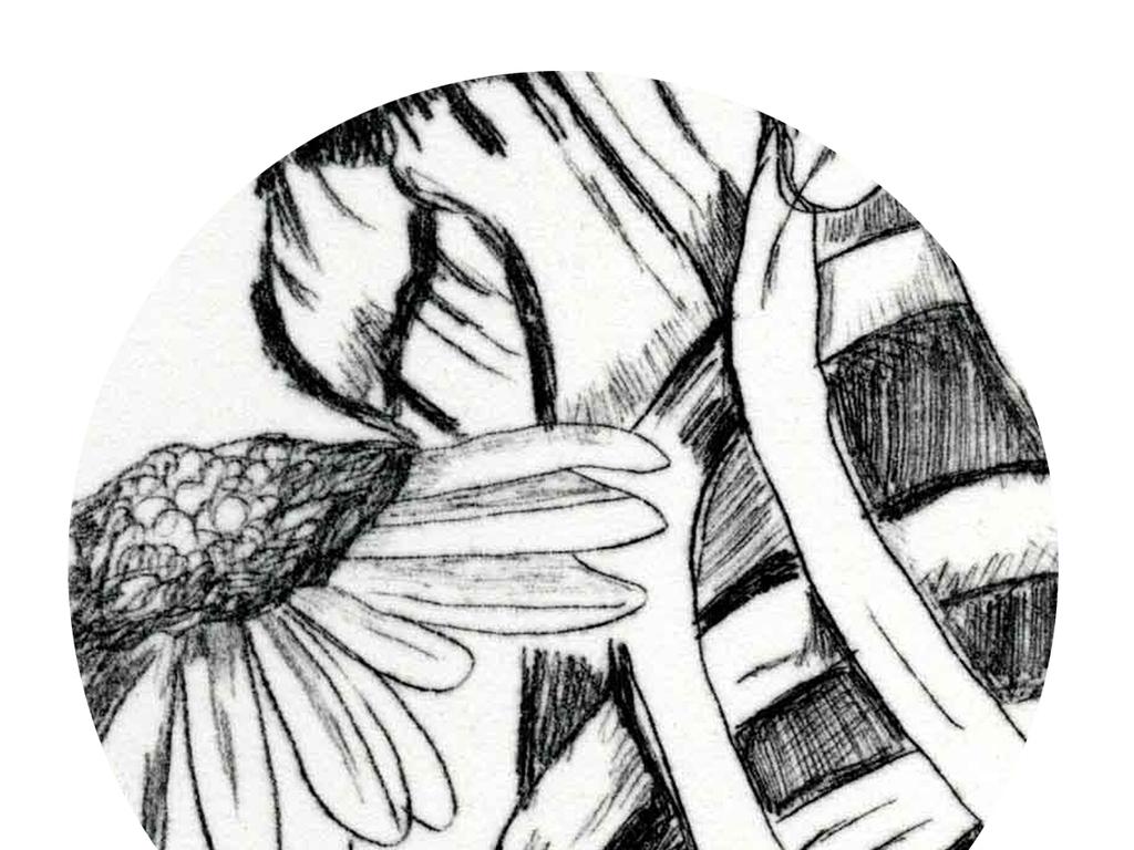 北欧现代简约手绘黑白插画美女与野兽