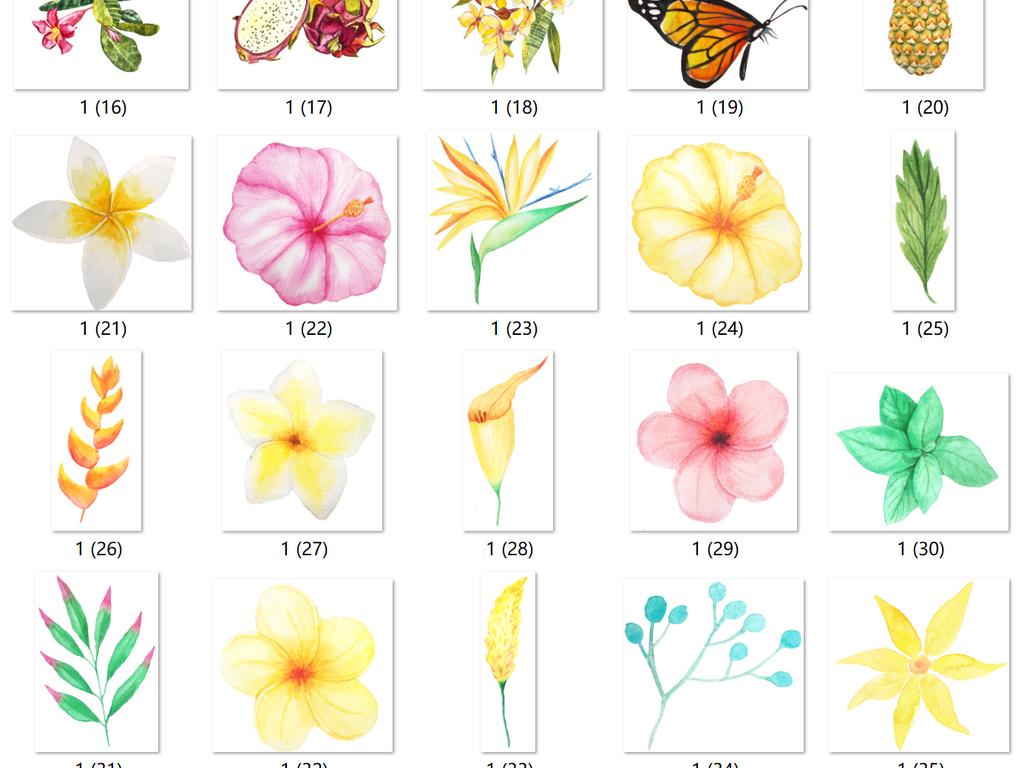 夏季水彩手绘花朵菠萝树叶清新免扣png