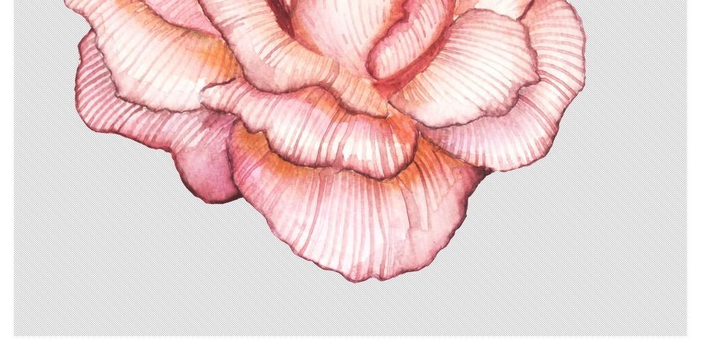 手绘水彩森系花草鹿角羽毛树叶psd分层素材
