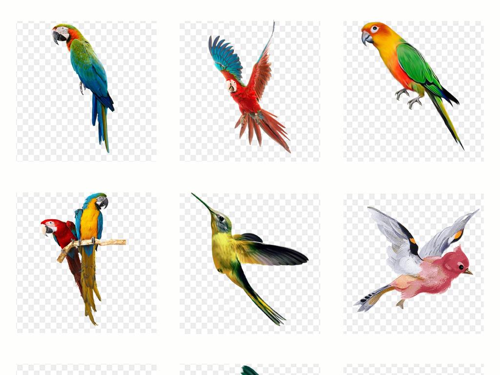 手绘水彩彩绘鸟鹦鹉一群鸟动物png免扣素材