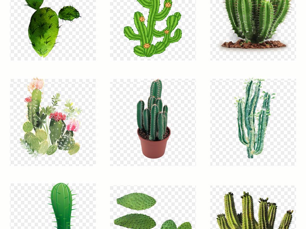 卡通手绘仙人掌植物png免扣素材