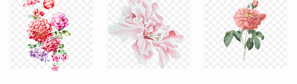 手绘唯美牡丹花卉水彩月季花植物png素材