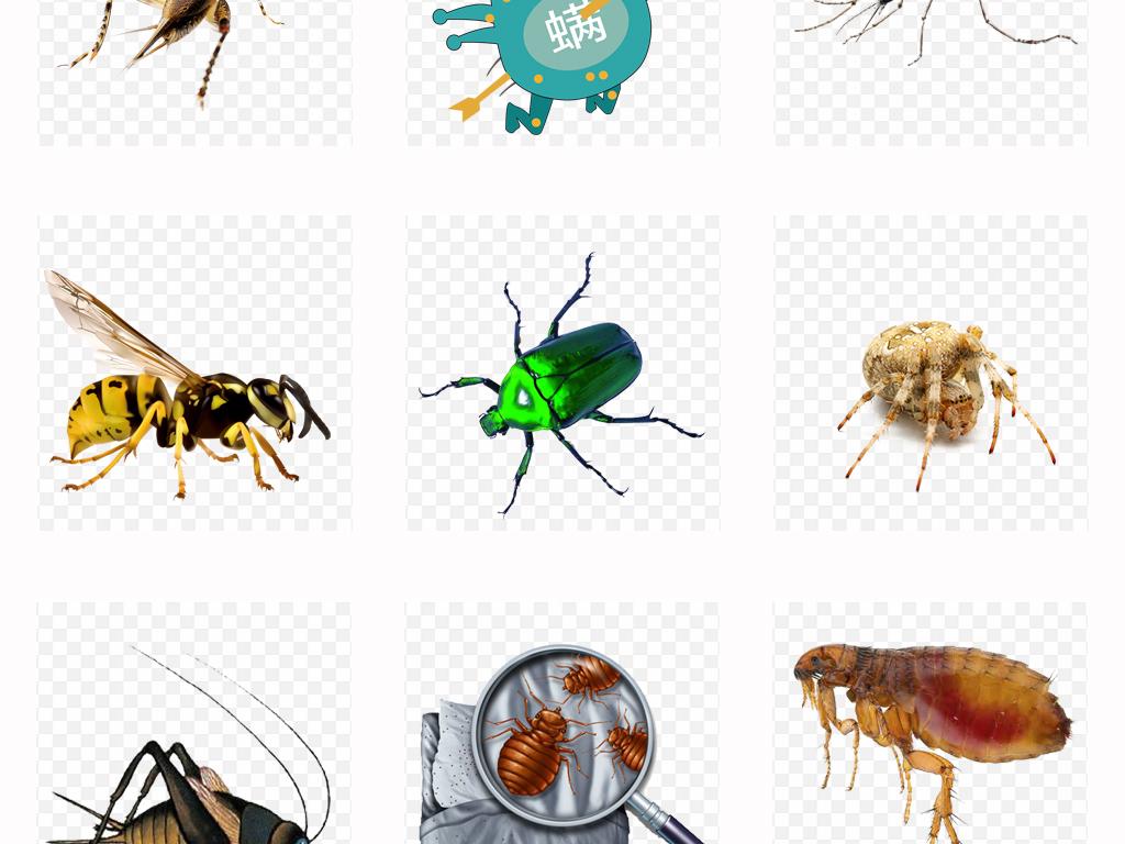 可爱卡通昆虫合集手绘甲虫动物背景png素材
