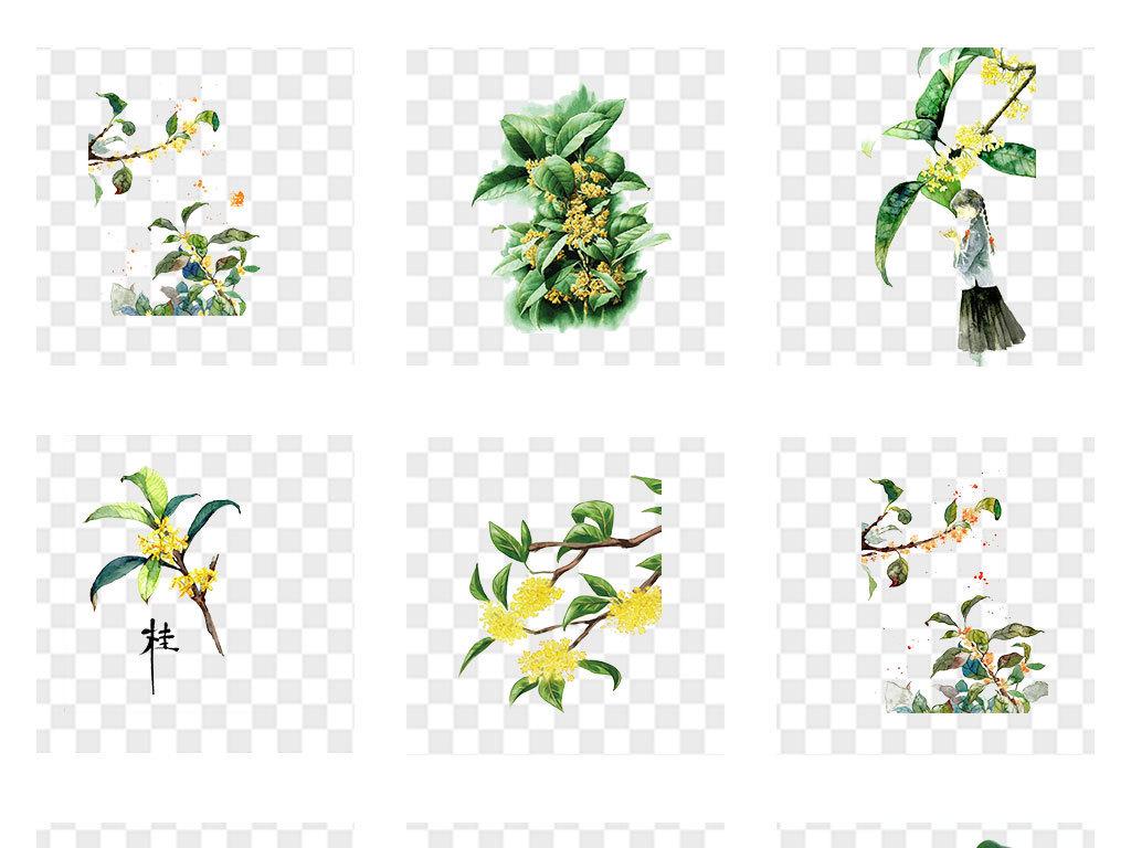 卡通桂花植物图片鲜花素材