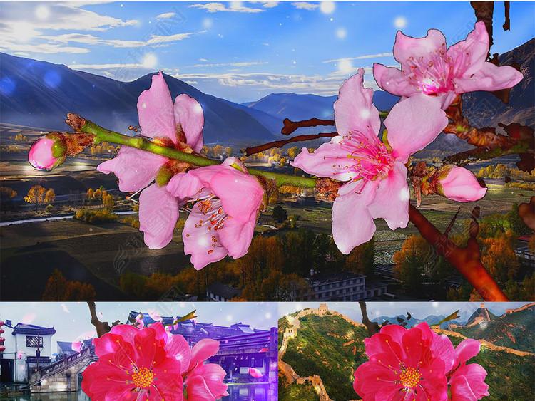 歌曲在那桃花盛开的地方舞台背景视频