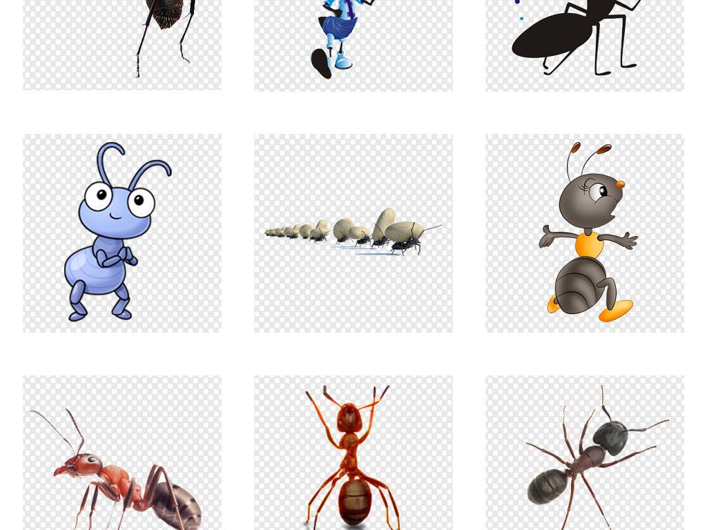 素材可爱海报动物图片png蚂蚁作文难忘的第一次养兔子卡通600字图片