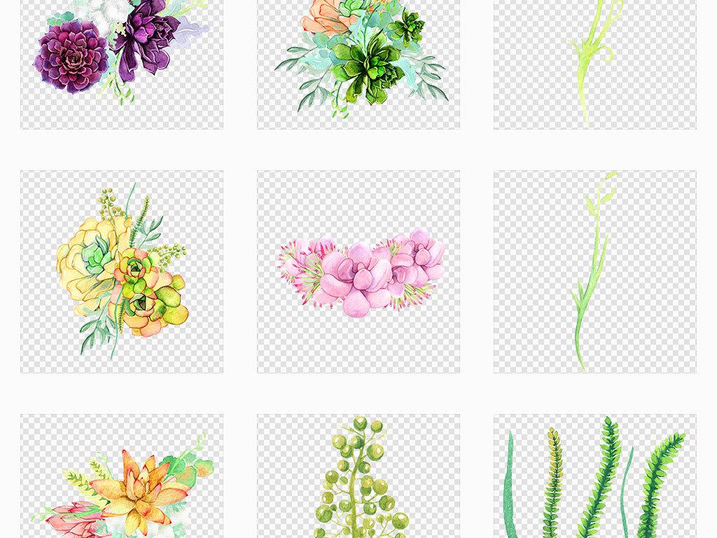 独立png/水彩手绘多肉植物花卉免抠图片素材_模板下载