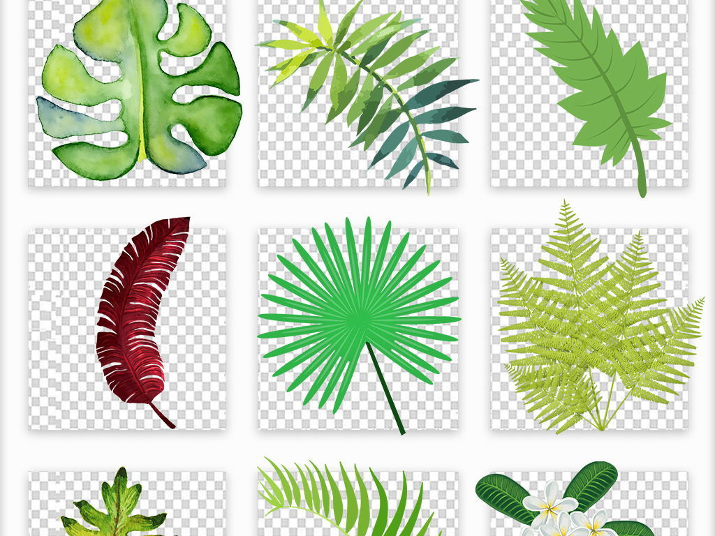 高清热带雨林植物夏季叶子水彩树叶芭蕉叶png素材