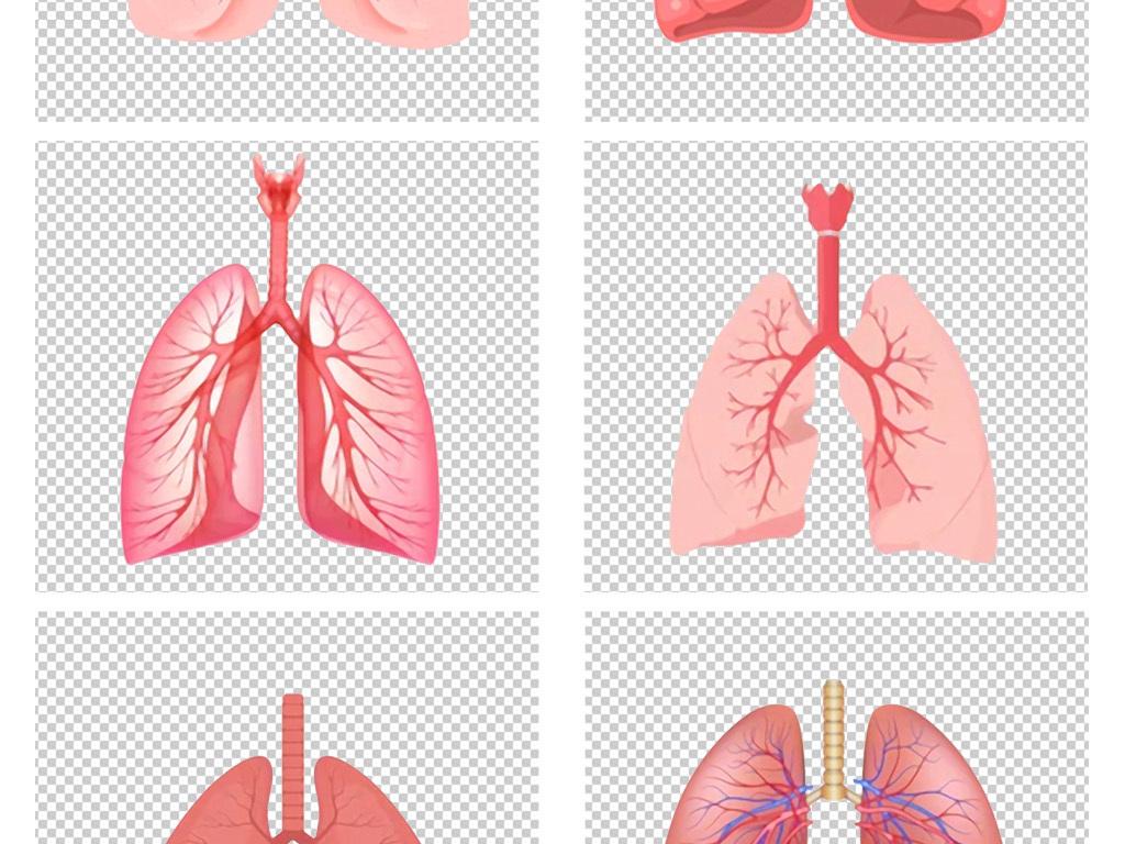 卡通手绘人体肺部器官经脉图png免扣素材