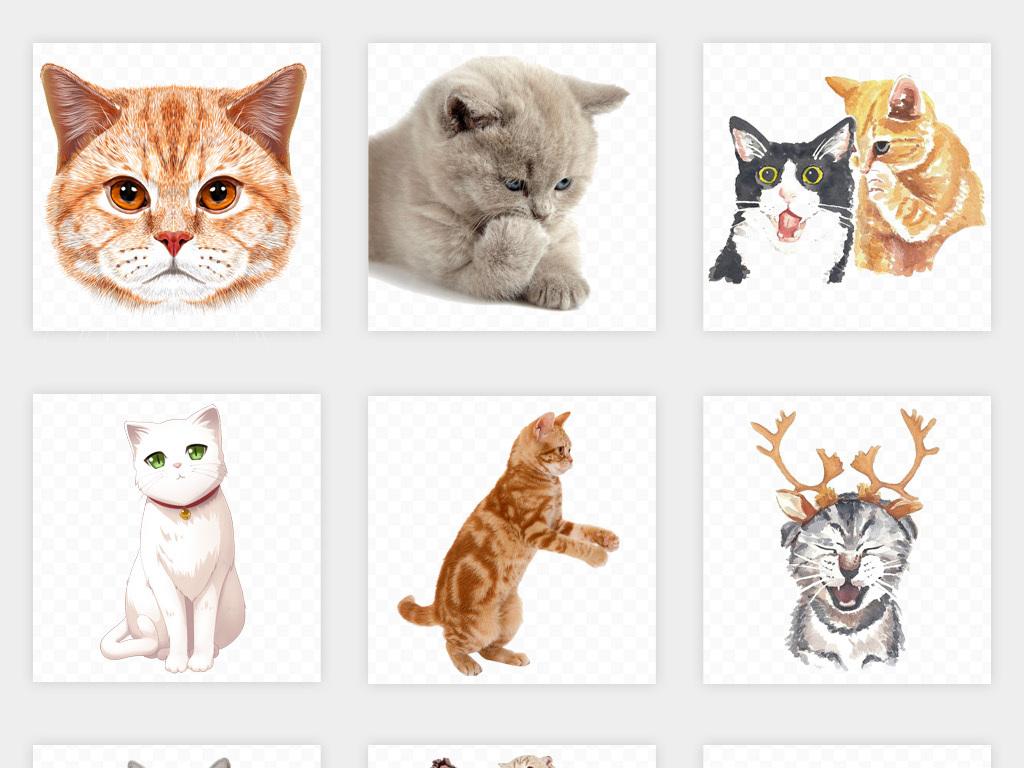 卡通手绘可爱宠物猫咪黄猫桔猫png免扣素材