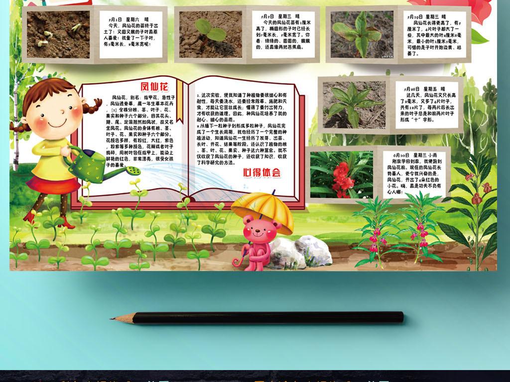 凤仙花成长记小报植物观察日记手抄小报素材