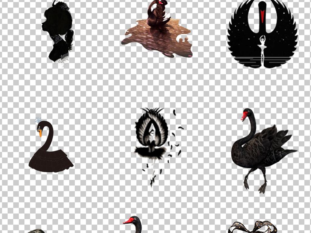 0727黑天鹅手绘天鹅卡通优雅高贵黑天鹅免抠素材