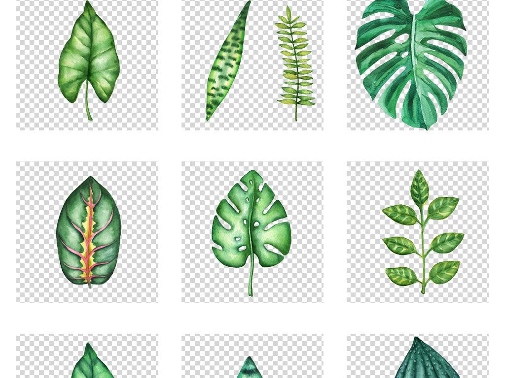 高清免扣png热带叶子手绘图片北欧小清新绿叶