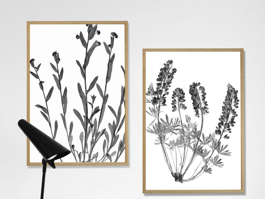 时尚黑白装饰画现代简约植物花卉北欧风格图图片