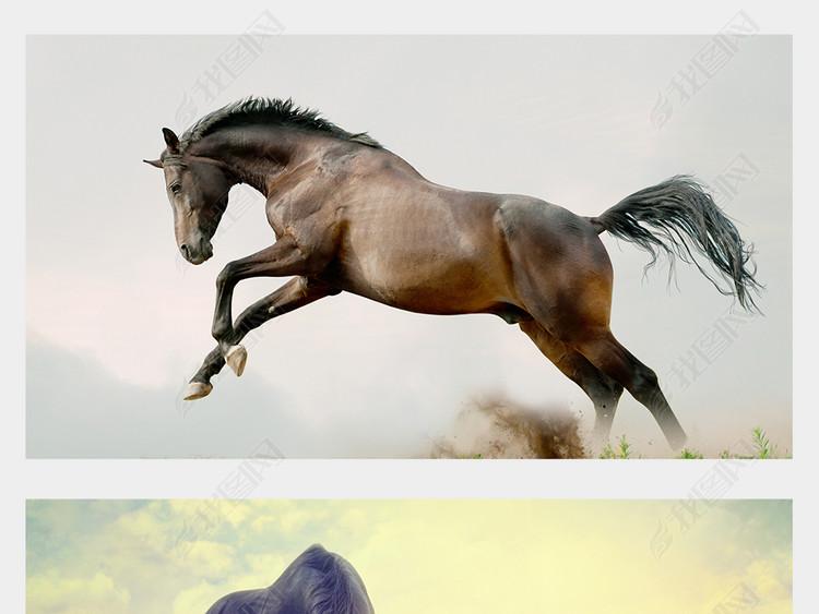 骏马赛马万马奔腾八素材马图高清动物摄影图
